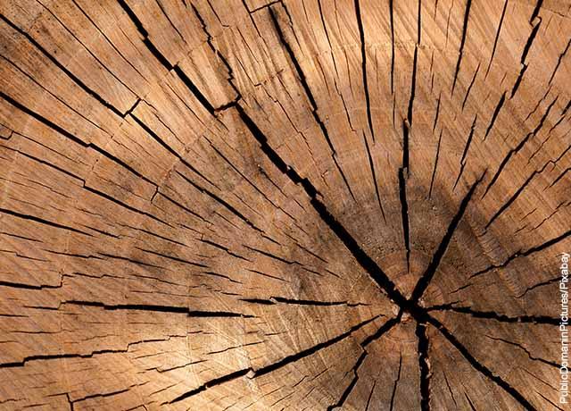 Foto de un tronco de madera