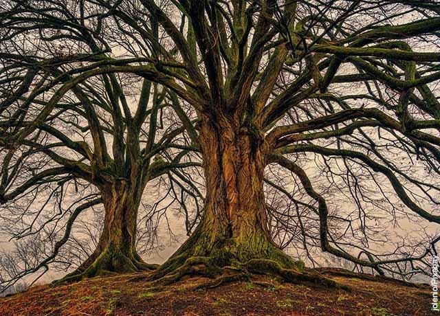 Foto de un árbol seco