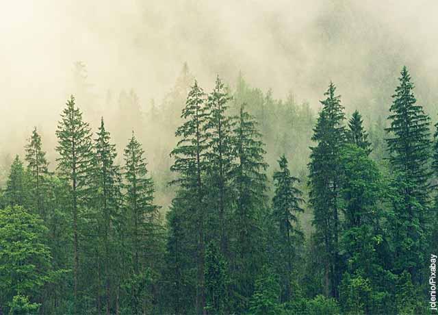 Foto de varios árboles en la niebla que muestra lo que es soñar con árboles