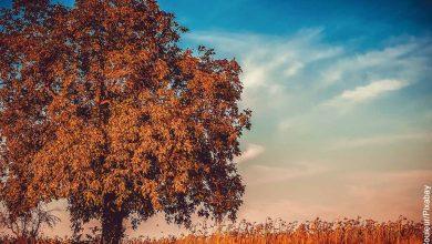 Foto de un árbol al atardecer que revela lo que es soñar con árboles