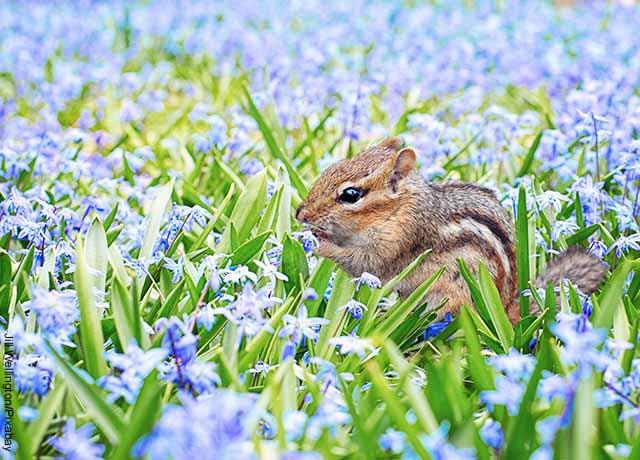 Foto de un roedor en medio de plantas