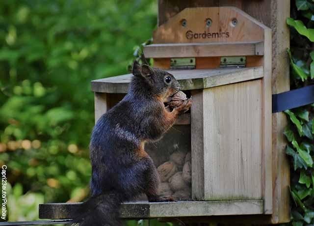 Foto de una ardilla comiendo una nuez