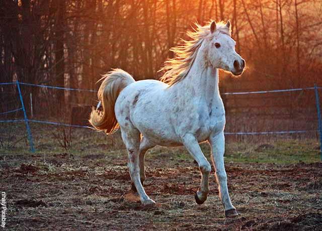 Foto de un caballo sobre el césped