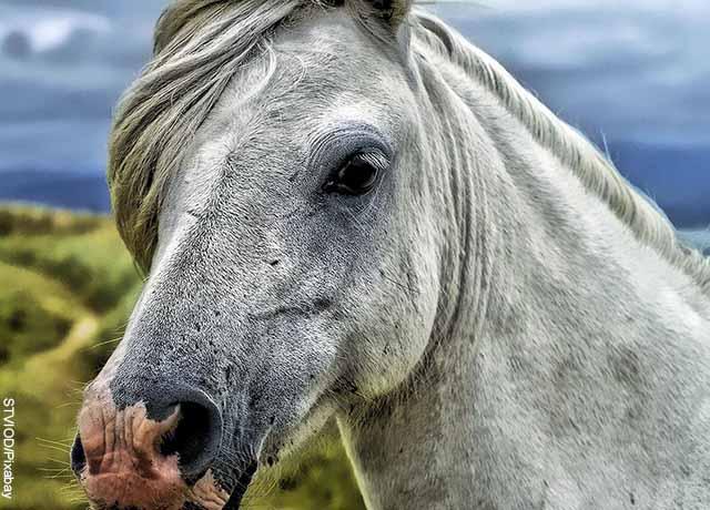 Foto de primer plano de un caballo