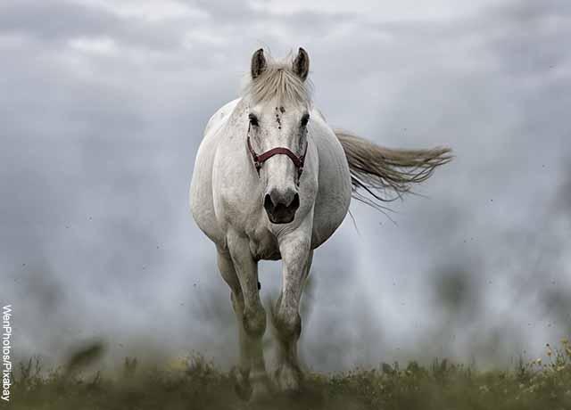 Foto de un caballo corriendo que revela lo que es soñar con caballo blanco