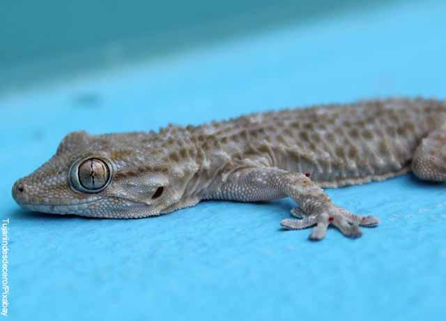 Foto de una pequeña lagartija que muestra lo que significa soñar con lagartijas