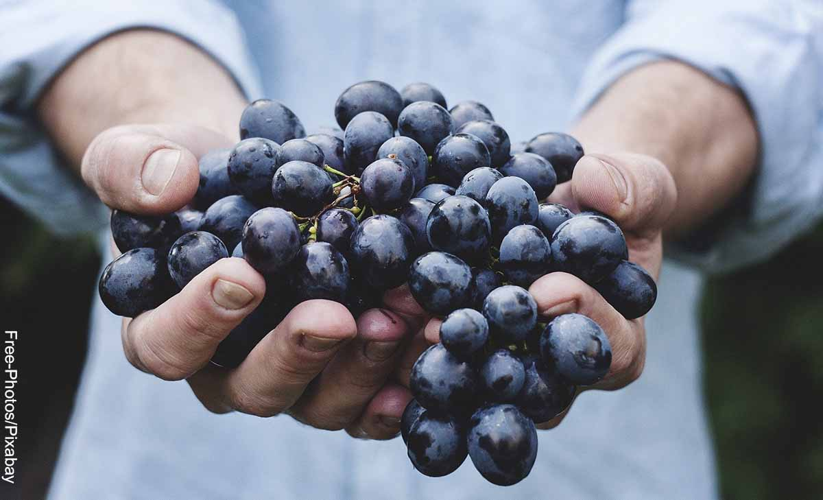 Foto de una persona sosteniendo un racimo que muestra lo que es soñar con uvas