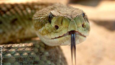 Apareció serpiente de dos cabezas y más de uno quedó asustado