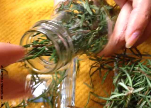 Foto de ramas de romero en una botella