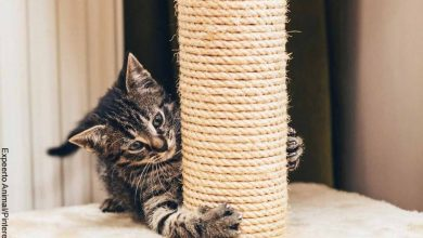 Foto de un gato jugando que muestra cómo hacer un rascador para gatos