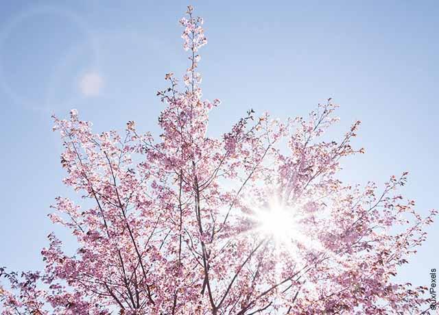 Foto de un árbol y el cielo que muestra qué significa el color rosa