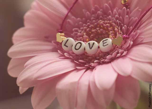 Foto de una flor rosada con la palabra love