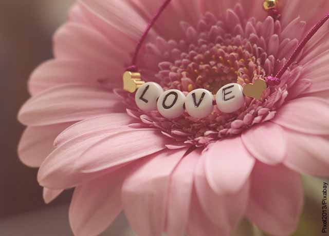 Foto de una flor rosada que revela qué significa la palabra amor