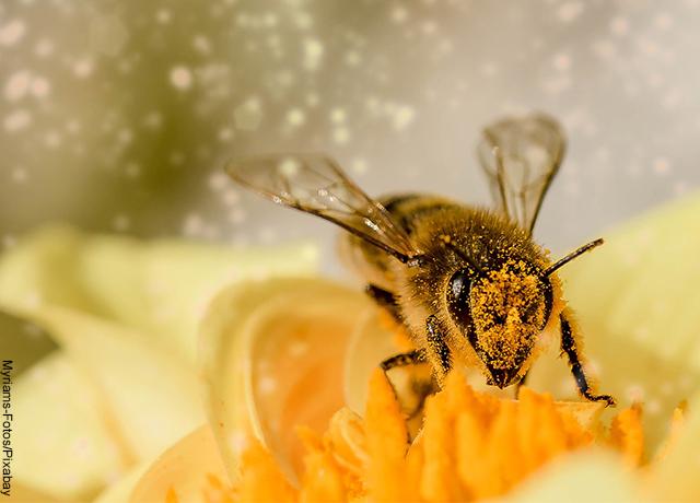 Foto de un insecto sobre una flor amarillo