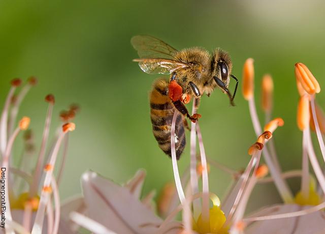 Foto de un insecto sobre una flor morada y naranja que muestra el significado de abeja