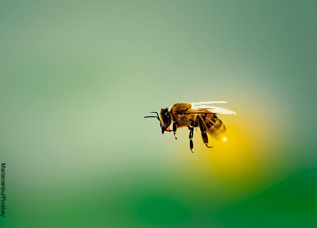 Foto de una abeja volando