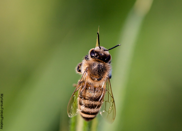 Foto de una abeja sobre una planta