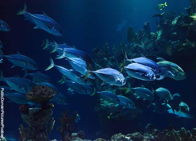 Foto de un acuario con peces