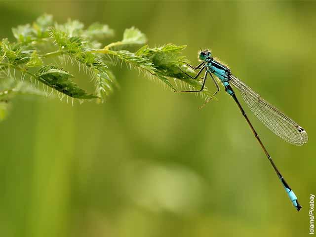 Foto de una libélula sobre una planta verde