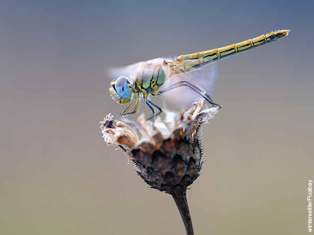 Foto de un insecto sobre una flor que revela el significado de libélula