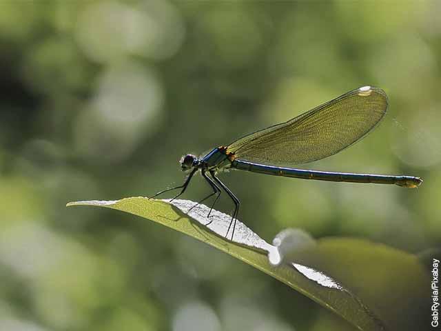 Foto de un insecto parado sobre la hoja de una planta