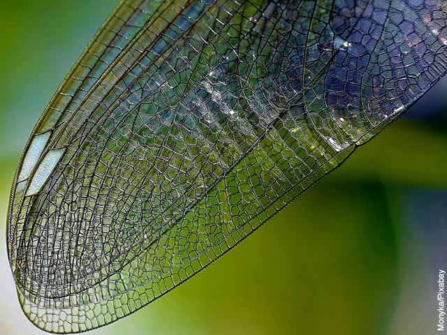 Foto en detalle del ala de una libélula