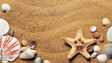 Foto de conchas de mar que revelan lo que es soñar con arena