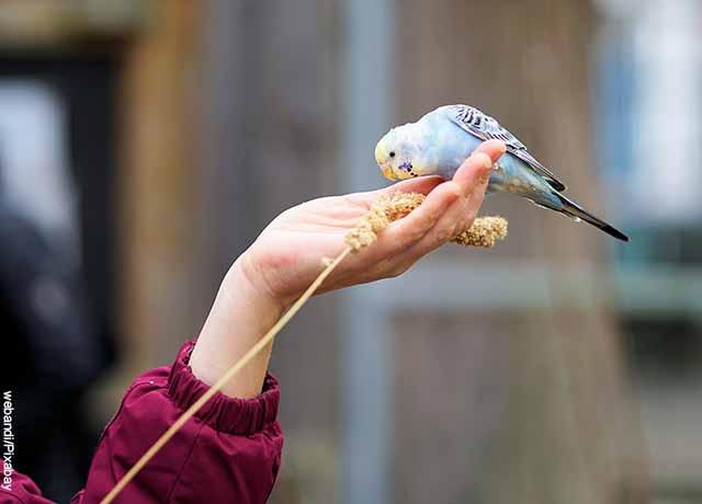 Foto de la mano de una mujer sosteniendo un pájaro