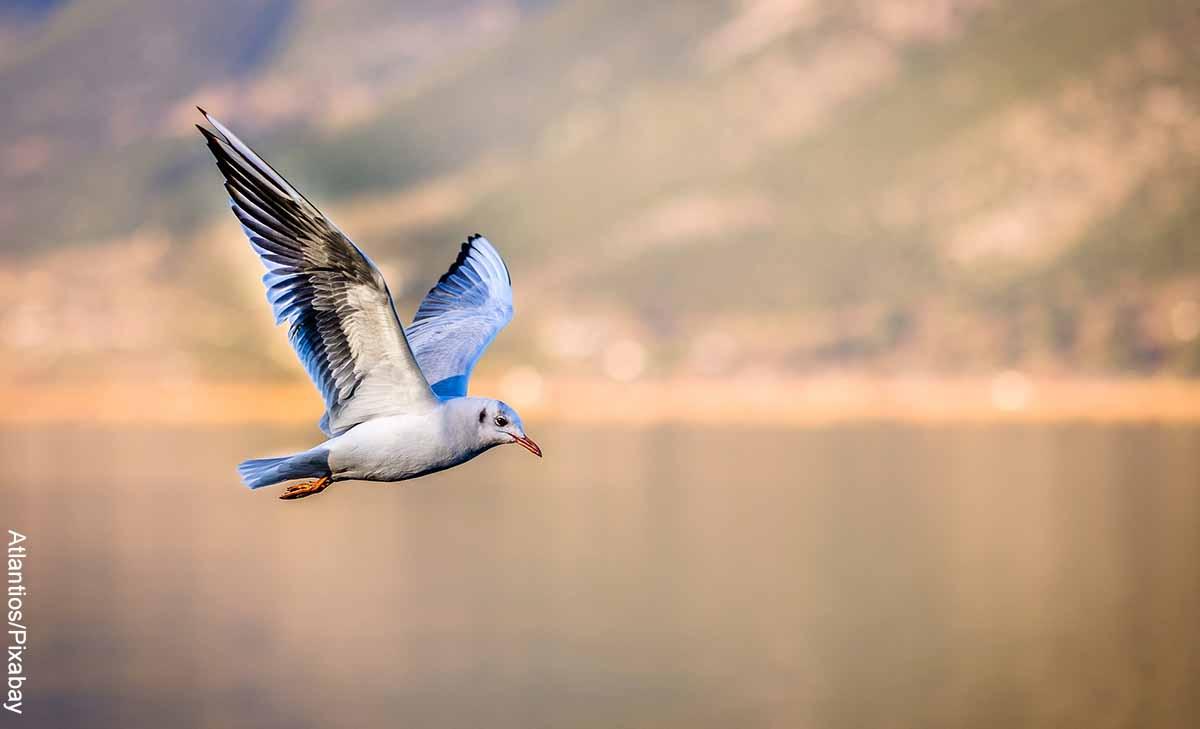 Foto de un pájaro blanco y azul volando sobre el mar que revela lo que es soñar con aves