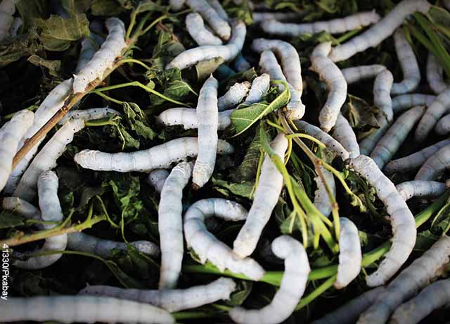 Foto de gusanos sobre la hierba