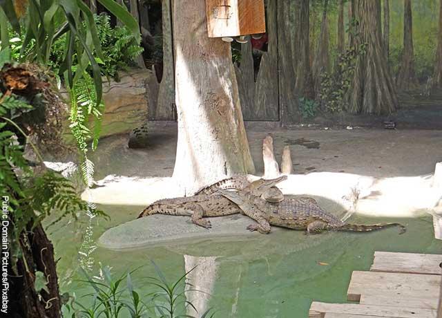 Foto de dos reptiles bajo un árbol
