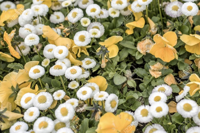 Foto de flores amarillas y blancas