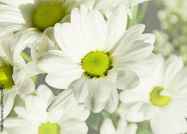 Foto de primer plano de flores blancas con amarillo