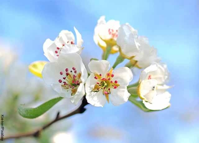 Foto de varias flores blancas con su interior morado y amarillo