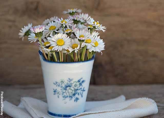 Foto de margaritas dentro de un recipiente blanco que muestra lo que es soñar con flores blancas