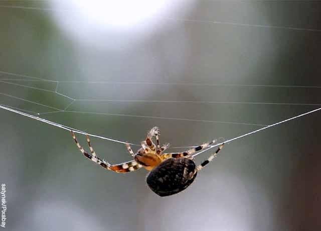 Foto de una araña pequeña colgada de un hilo