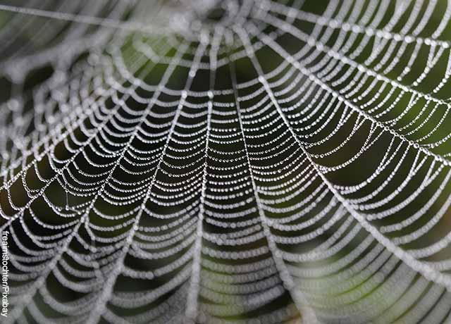 Foto del tejido blanco de una araña