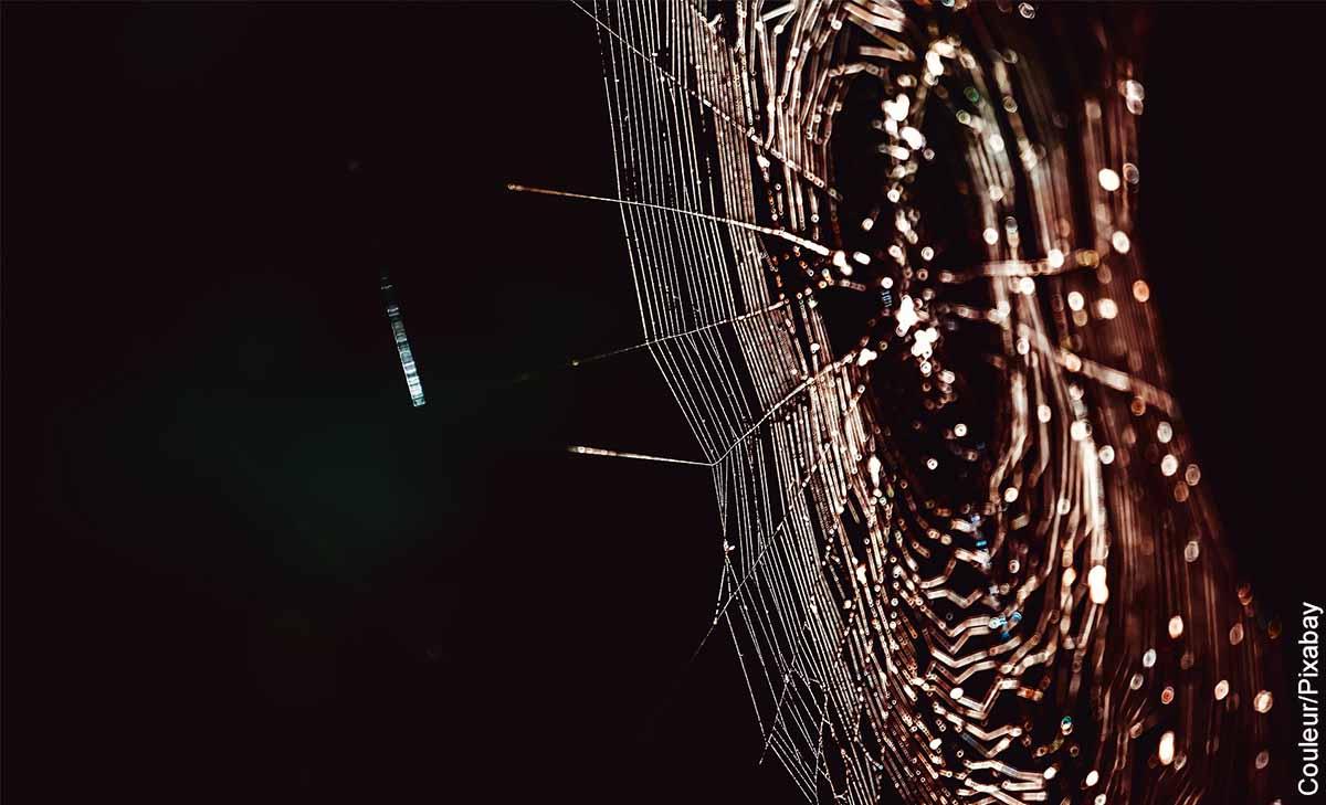 Foto de las patas de una araña en una telaraña que revelan o que es soñar con telarañas
