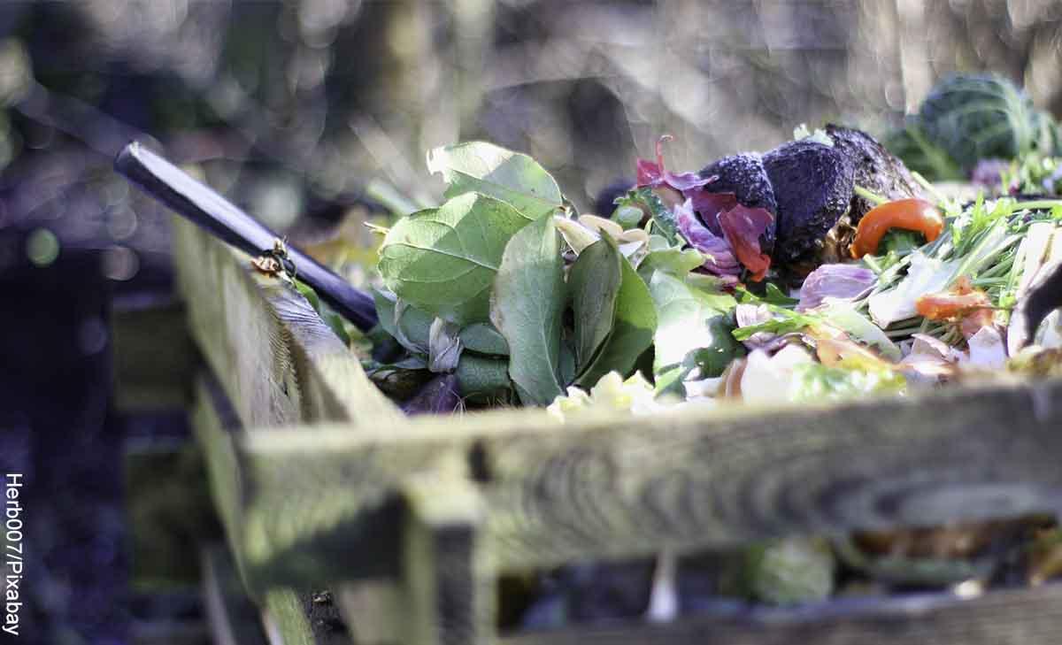 Foto de residuos orgánicos en una caja