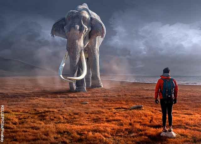 Foto de un hombre frente a un elefante