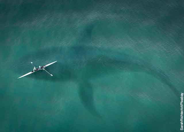 Foto de una barca en el mar con una ballena por debajo