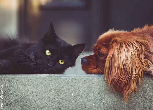 Proponen licencia remunerada por muerte de mascotas