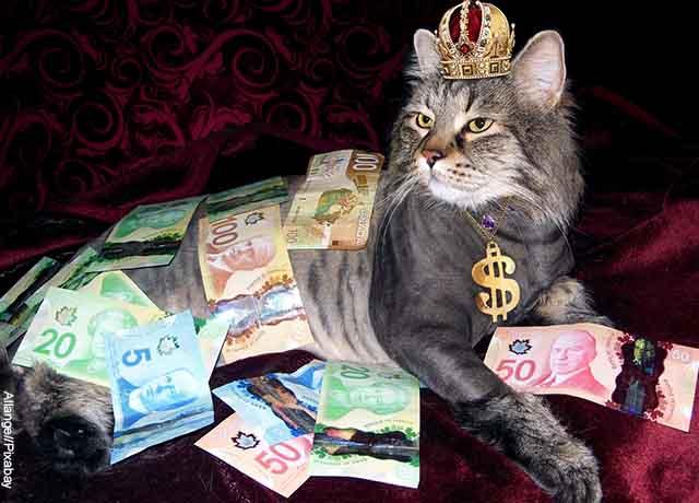 Foto de un gato acostado con billetes