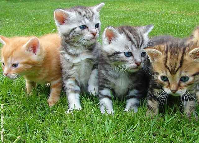 Foto de gatos pequeños sentados en un parque