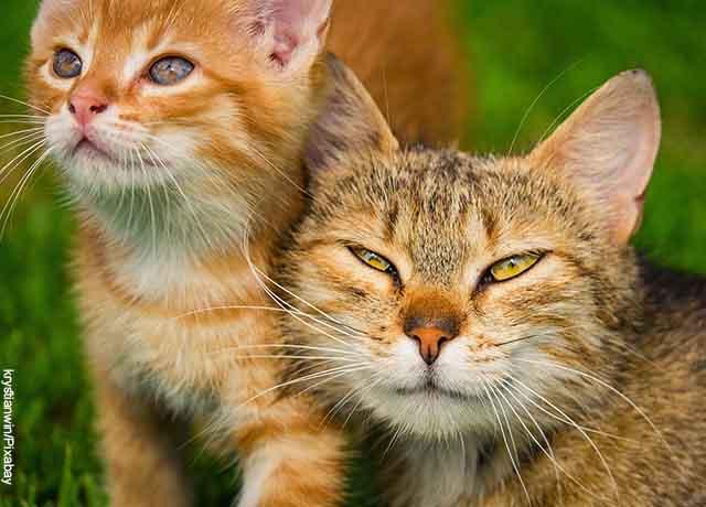 Foto de una gata junto con su pequeños gatito