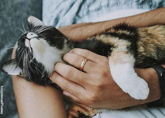 Foto de un gato acostado en manos de su amo