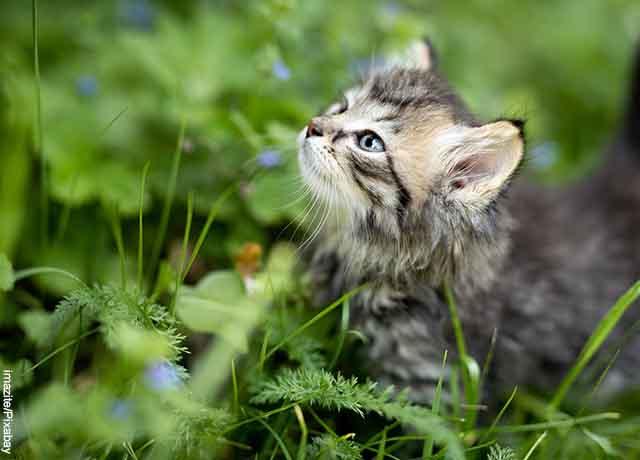 Foto de un gatito metido entra plantas