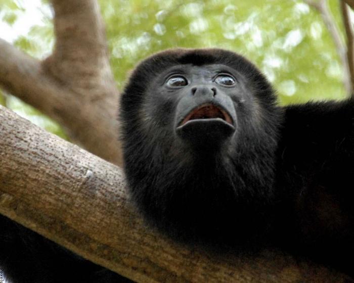 Foto de la cara de un mono