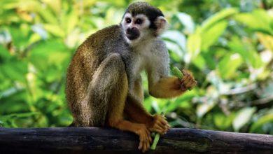 Qué significa soñar con monos, ¡buenos augurios en tu vida!