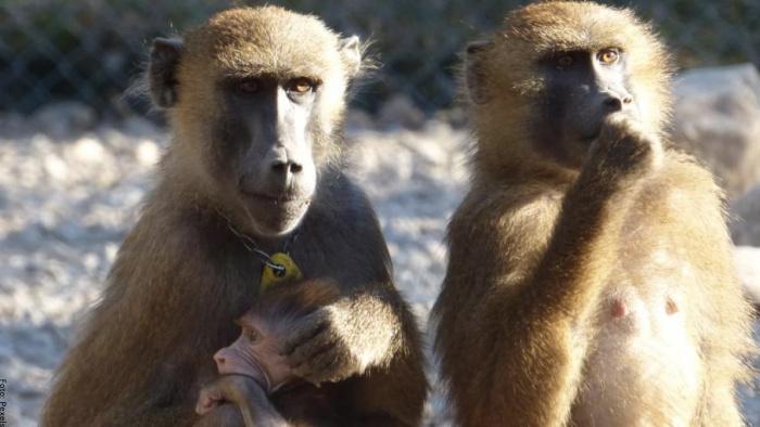 Foto de una familia de monos